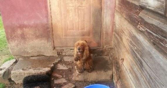 Do dwóch lat więzienia grozi mieszkańcowi Bliznego na Podkarpaciu, który zostawił swoje psy na dwa tygodnie bez jedzenia, wody i możliwości schronienia. Psy zostały już umieszczone w schronisku.