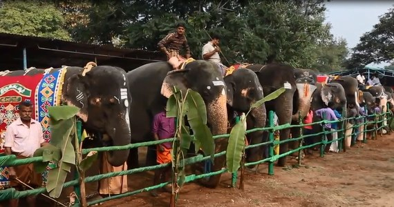 W Thekkamapatti specjalnie dla 33 świątynnych słoni zorganizowano 48-dniowy obóz rewitalizacyjny. Zwierzęta będą mogły odpocząć od ciężkiej pracy w specjalnie dla nich zorganizowanym spa. Nad słoniami będzie czuwać sztab weterynarzy.