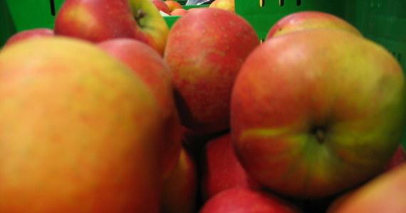 W tym roku jabłka są dwa razy droższe niż przed rokiem. Niektóre krajowe odmiany na początku stycznia kosztują 3,5-4,5 zł za kg, czyli tyle, ile importowane mandarynki - poinformowała rzecznik rynku hurtowego w Broniszach Małgorzata Skoczewska. Do droższych odmian należą: szara renta (boskop), cortland i lobo.