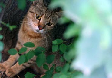NIK alarmuje: Rośnie liczba bezdomnych psów i kotów