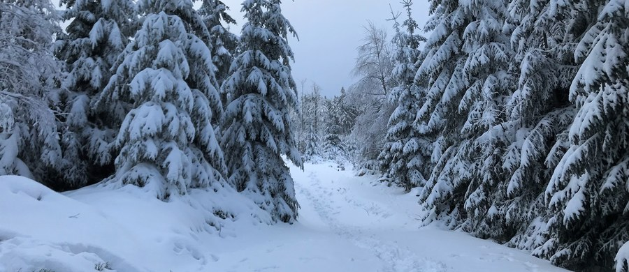 11 tysięcy odbiorców bez prądu, trudne warunki na drogach - to efekt nocnych intensywnych opadów śniegu na Podkarpaciu.