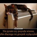 1430207463_pa8x3g_600.jpg