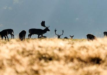 Sejm znowelizował Prawo łowieckie. Posłowie za zakazem udziału dzieci w polowaniach
