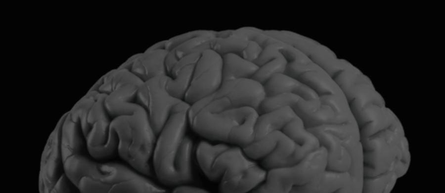 """Mózg głodnej myszy potrafi uśmierzyć ból, by ułatwić jej poszukiwania pożywienia i zwiększyć szanse przetrwania. Naukowcy z University of Pennsylvania odkryli rejon mózgu, który za to odpowiada. Jak piszą na łamach czasopisma """"Cell"""", liczący zaledwie około 300 neuronów ośrodek jest tak wyspecjalizowany, że eliminuje tylko mniej niebezpieczny ból związany z procesem zapalnym, pozostawia natomiast odczuwanie gwałtownego bólu, który może alarmować o sytuacjach zagrażających życiu."""