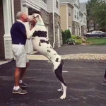 Ogromny pies chciał dać panu całusa. Finał?