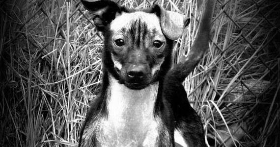 """Poznańska policja poszukuje sprawcy brutalnego morderstwa psa - """"Franka"""". Odciętą głowę zwierzęcia odnaleziono w niedzielę."""