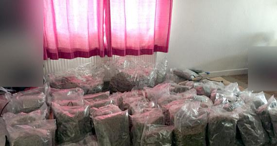 Policjanci z CBŚP ustalili, że na terenie Irlandii dwóch Polaków zajmuje się przestępczością narkotykową. Tę informację przekazali kolegom z policji irlandzkiej, która zatrzymała podejrzanych o udział w obrocie hurtowymi ilościami narkotyków oraz zabezpieczyła 78 kg marihuany wartej 1,6 miliona euro. Działania były koordynowane przez Europol.