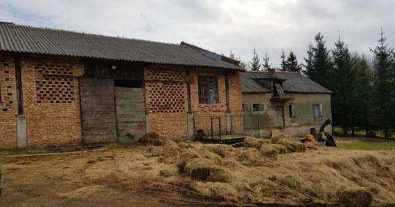 Policjanci z Leska na Podkarpaciu zajmują się sprawą zwierząt przebywających w skandalicznych warunkach, w jednym z gospodarstw w Bereżnicy Wyżnej. Na posesji znaleziono cztery martwe konie. Pozostałe zwierzęta były zaniedbane, nie  miały pożywienia i wody. Przesłuchano 43-letnia kobietę, która miała sprawować nad nimi opiekę.