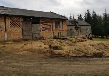 Martwe konie obok zwierząt bez jedzenia i picia. Przerażające warunki w gospodarstwie