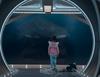 Zobacz trailer: The Meg