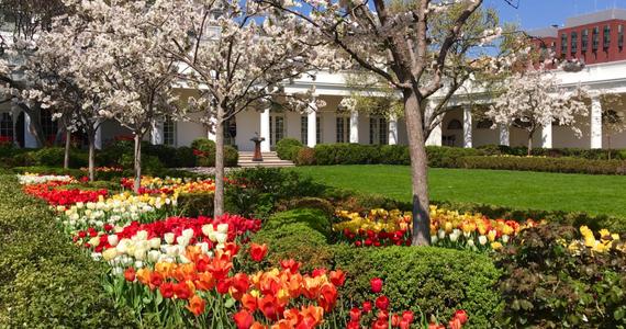 W Waszyngtonie w końcu zrobiło się ciepło. To doskonała okazja, by pokazać Wam, jak wyglądają wiosną ogrody Białego Domu i cały teren przy rezydencji amerykańskiego prezydenta.