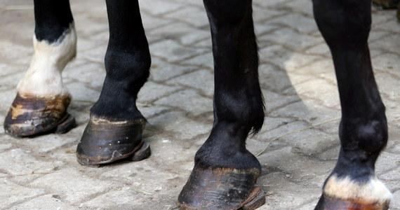 Spłoszyły się konie ciągnące wóz z turystami na drodze do Morskiego Oka w Tatrach. Dwie osoby zostały ranne - informuje dziennikarz RMF FM Maciej Pałahicki.