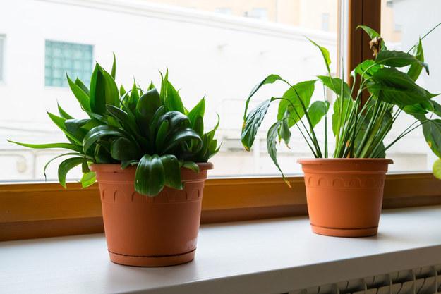 Te rośliny są idealne do sypialni! Pomagają zasnąć i likwidują stres