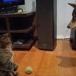 Kot pokazał psu, kto jest szefem