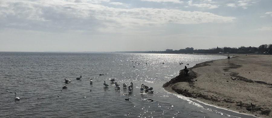 W czwartek będą znane wyniki badań kolejnych próbek wody pobranych dziś przez Sanepid na dwunastu kąpieliskach w całym Trójmieście. To działania związane z awarią przepompowni na Ołowiance w Gdańsku, której efektem był zrzut ścieków do Motławy. Dotychczasowe wyniki badań są dobre.