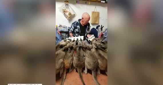 Wolontariusze w australijskim schronisku w mieście Victoria wynaleźli cudowne urządzenie. Skonstruowali narzędzie, dzięki któremu są w stanie nakarmić 10 kangurów jednocześnie.