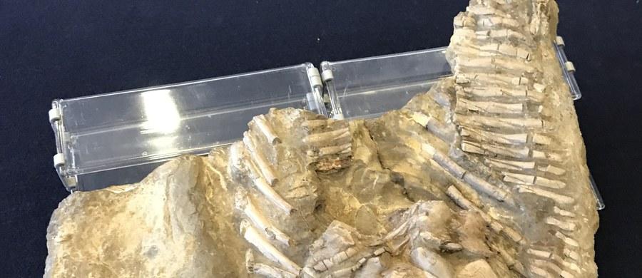 Odkryto najstarsze na świecie ślady gruźlicy. Wiadomo już, że ćwierć miliarda lat temu chorował na nią morski gad. To odkrycie dokonane przez polskich naukowców oraz ich kolegę ze Stanów Zjednoczonych.