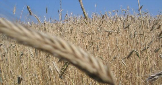 W ciągu kilku tygodni, przed żniwami, zostaną zaproponowane nowe rozwiązania dla rolników, specjalny pakiet wsparcia polskiej wsi - zapowiedział w Toruniu premier Mateusz Morawiecki.