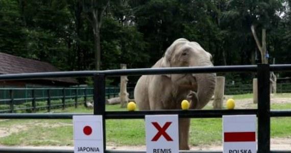 W tym roku podczas mundialu w Rosji wyniki meczów polskiej reprezentacji typuje słonica Citta z krakowskiego zoo. Mogliście już ją poznać przy okazji Euro 2012. Dziś przed południem Citta wskazała zwycięzcę w spotkaniu Polska-Japonia…