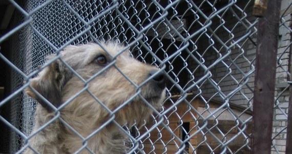 Krakowskie Towarzystwo Opieki nad Zwierzętami już po raz ósmy organizuje Marsz Azylanta. W sobotę 30 czerwca o 10 kilkadziesiąt psów adoptowanych z krakowskiego schroniska dla bezdomnych zwierząt przejdzie przez stolicę Małopolski.
