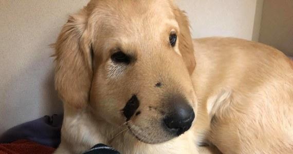 Hasło, że pies jest najlepszym przyjacielem człowieka znów nabrało mocy po tym, jak pewna Amerykanka podzieliła się historią, jaka spotkała ją podczas spaceru ze swoim zwierzakiem. Todd uratował ją przed ukąszeniem grzechotnika.