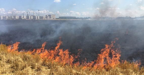Strażacy opanowali pożar przy ul. Konińskiej we Wrocławiu. Płonęło ok. 50 ha zboża.