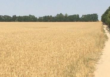 Wielkopolska: Takiej suszy nie było od lat. Rolnicy zaczynają liczyć straty