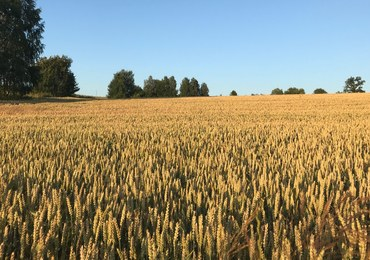 Spore straty rolników. Susza dotknęła ponad milion hektarów upraw