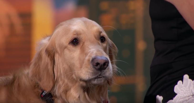 """Duet Oscar i Pam zachwycił jurorów oraz publiczność amerykańskiego """"Mam talent"""". Nie byłoby w tym nic dziwnego, gdyby nie fakt, że Oscar jest psem."""