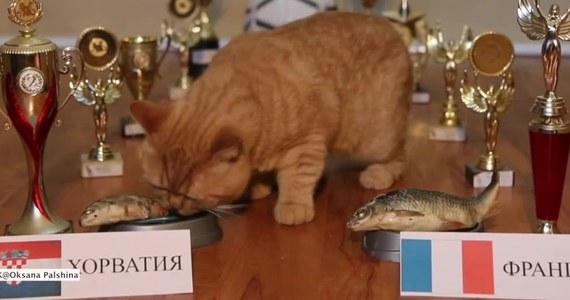 Kot Donatello-Dorato z Ułan-Ude wzorem wielu innych zwierząt wytypował wynik meczu rosyjskiego mundialu. Tym razem zwierzę musiało obstawić zwycięzcę finałowego spotkania między Francją a Chorwacją.