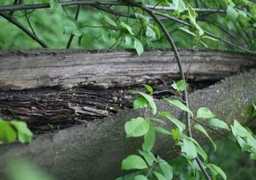 Eksperci analizują zdjęcia z obszaru poszukiwań pytona