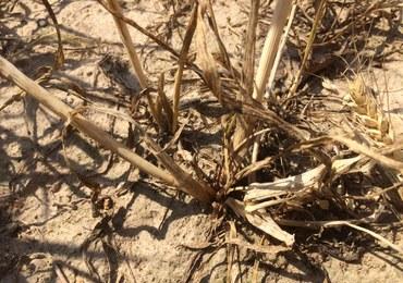 16 krajów poparło polski wniosek ws. rolników dotkniętych suszą