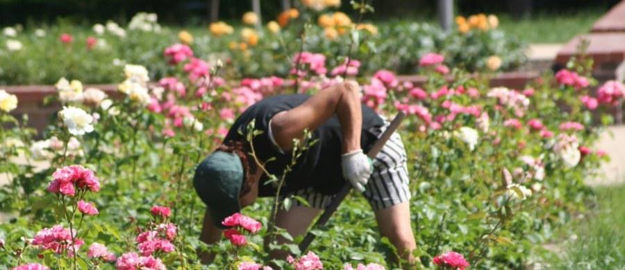 Po kilku tygodniach upałów i suszy w północno-zachodniej Anglii zostanie wprowadzony zakaz używania węży ogrodowych. Za podlewanie za ich pomocą kwiatów, trawnika, mycie samochodu przed domem albo wypełnianie ogrodowych basenów grozić będzie grzywna w wysokości 1000 funtów.