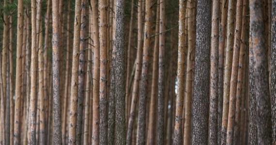 KE uruchomiła wobec Polski procedurę o naruszenie prawa UE w związku przepisami w sprawie ochrony lasów. Wskazała m.in., że plany związane z gospodarką leśną, np. pozyskiwanie drewna na obszarach chronionych, muszą być poddane ocenie ich skutków, a tak nie jest.