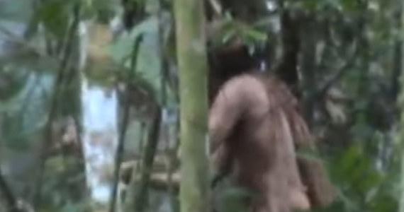 """Do sieci trafiło nagranie, które wywołało sensację. Przedstawia mężczyznę usiłującego ściąć drzewo w środku Amazonii. To - jak ustalili naukowcy - około 50-latek, który od ponad 22 lat żyje samotnie. Jego plemię zostało wymordowane. Nazywany jest """"człowiekiem z dziury""""."""