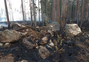 Rząd Szwecji prosi NATO o pomoc w gaszeniu pożarów lasów