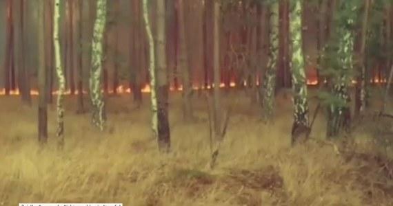 Niemieckie władze zapewniają, że ogień, który strawił ok. 50 hektarów lasu sosnowego na wschodzie kraju, jest już po kontrolą i nie zagraża okolicznym mieszkańcom. Pożar wybuchł w czwartek w pobliżu autostrady pod Poczdamem w Brandenburgii.