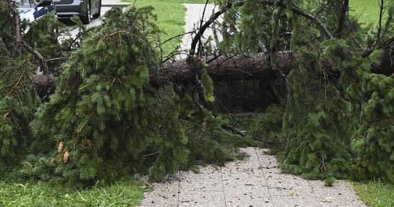 Jedna osoba nie żyje po tym jak drzewo przewróciło się na samochód w Nowej Rudzie koło Kłodzka na Dolnym Śląsku. Do zdarzenia doszło przy ulicy Cmentarnej.