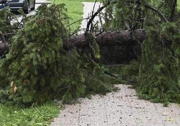 Drzewo przewróciło się na samochód w Nowej Rudzie. Nie żyje mężczyzna