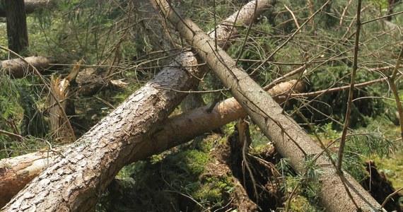Chłopiec, którego przygniotło drzewo, zmarł w szpitalu w Gorzowie Wielkopolskim. Drzewo przewróciło się podczas czwartkowej burzy na przyczepę kempingową, w której był 12-latek.