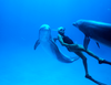 Zobacz trailer: Człowiek delfin