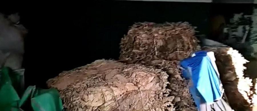 700 kilogramów krajanki i liści tytoniowych bez polskich znaków akcyzy przejęli policjanci z Brzeska w województwie małopolskim. Znaleziono też suszarki bębnowe i maszynę do rozdrabniania liści. Zatrzymanych zostało dwóch mężczyzn.