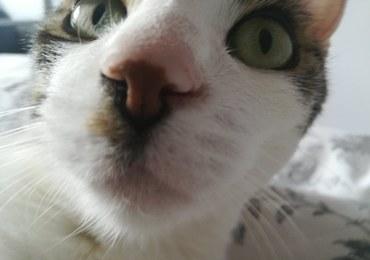 """Chcą wyplenić koty, by ratować rodzime gatunki zwierząt. """"Urodzeni mordercy w miękkich futerkach"""""""