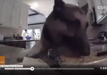 Kamera nagrała, jak pies podjada ciasto