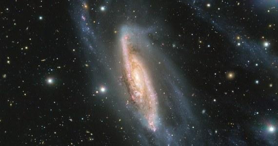 Europejskie Obserwatorium Południowe (ESO) opublikowało właśnie najnowsze zdjęcie pięknej galaktyki spiralnej NGC 3981, widocznej w gwiazdozbiorze Pucharu, około 65 milionów lat świetlnych od Ziemi. Sfotografowano ją w maju bieżącego roku z pomocą instrumentu FORS2 (FOcal Reducer and low dispersion Spectrograph 2) zainstalowanego na należącym do ESO Bardzo Dużym Teleskopie (VLT).