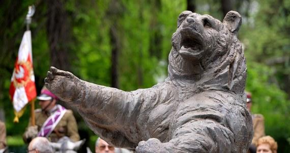 Brytyjski animator Iain Harvey pracuje nad krótkometrażowym filmem animowanym o losach syryjskiego niedźwiedzia brunatnego o imieniu Wojtek, który podczas II wojny światowej został adoptowany przez żołnierzy armii Andersa. Premierę zaplanowano na 2020 rok.