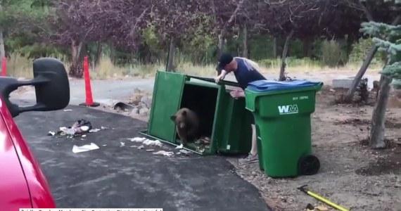 Nie jeden, nie dwa, a aż trzy małe niedźwiedzie utknęły w koszu na śmieci w pobliżu miasta Reno w Nevadzie. Mimo że próbujące się wydostać z pułapki misie zdołały przewrócić śmietnik, nie potrafiły otworzyć klapy i uciec. Pomogli im w tym strażacy, dzięki którym zwierzaki mogły wrócić pod opiekę czuwającej w pobliżu mamy.