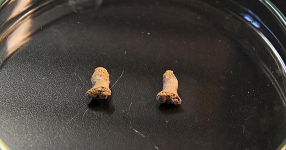 Najstarsze szczątki człowieka na terenie Polski mają ponad 100 tys. lat. Są to kości dłoni należące do neandertalskiego dziecka, które zostały przetrawione przez dużego ptaka. Szczątki znaleziono w Jaskini Ciemnej (woj. małopolskie). Do tej pory za najstarsze szczątki ludzkie z obszaru Polski, również należące do neandertalczyka, uznawano te pochodzące z Jaskini Stajnia w Jurze Krakowsko-Częstochowskiej. Były to trzy zęby trzonowe, których wiek oszacowano na ok. 52-42 tys. lat.