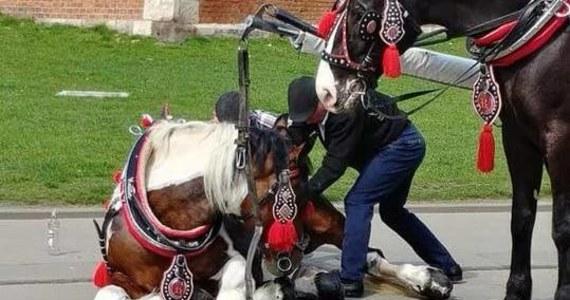 Do dramatycznego upadku konia doszło wczoraj około godziny 16. O całym zajściu Krakowskie Stowarzyszenie Obrony Zwierząt zawiadomili przerażeni przechodnie, którzy szli ulicą Grodzką, gdy zwierzę upadło. To kolejny taki przypadek w stolicy Małopolski.
