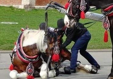 Kolejny upadek konia pod Wawelem. Chwilę później wrócił do pracy